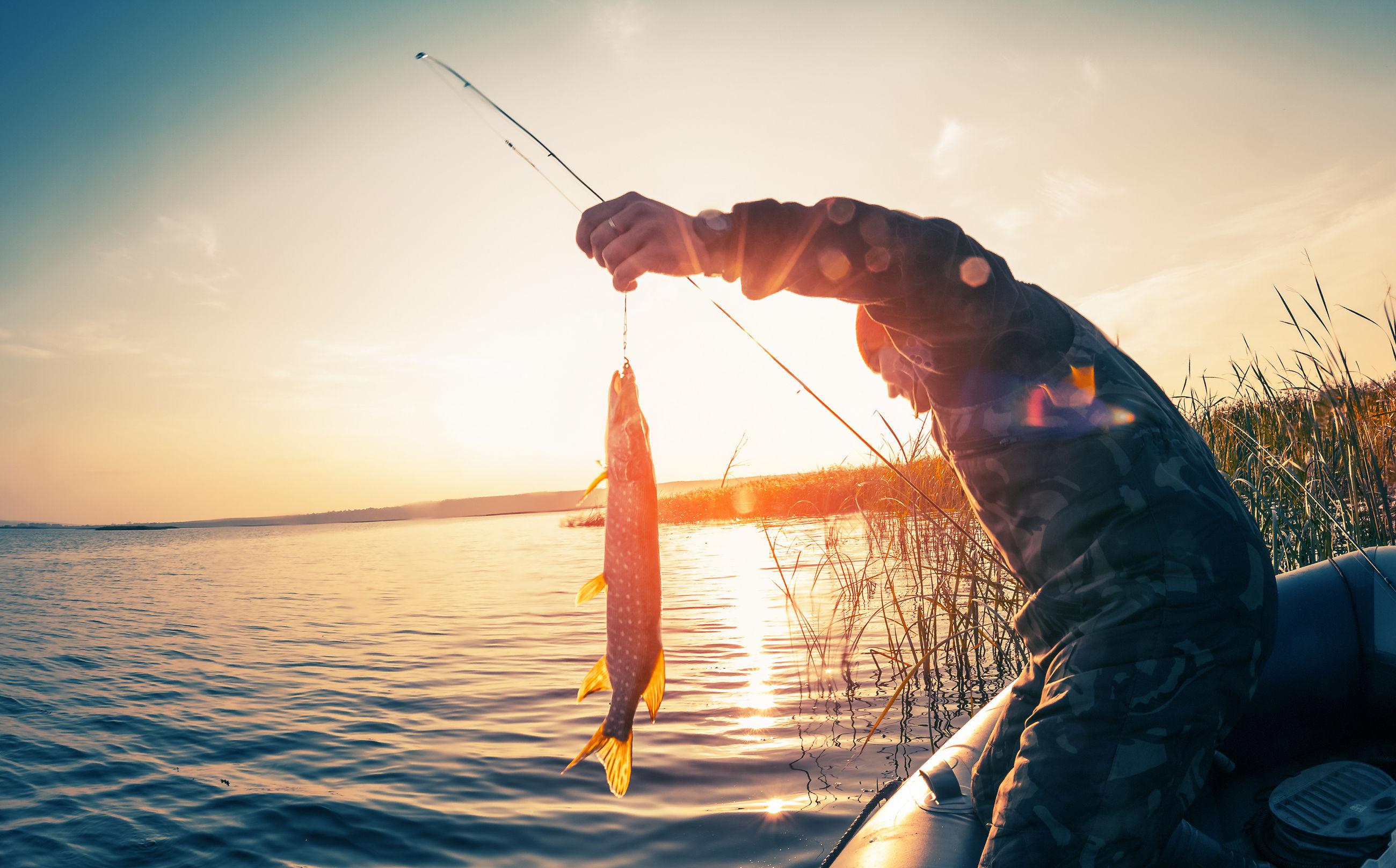 рыба и рецепты