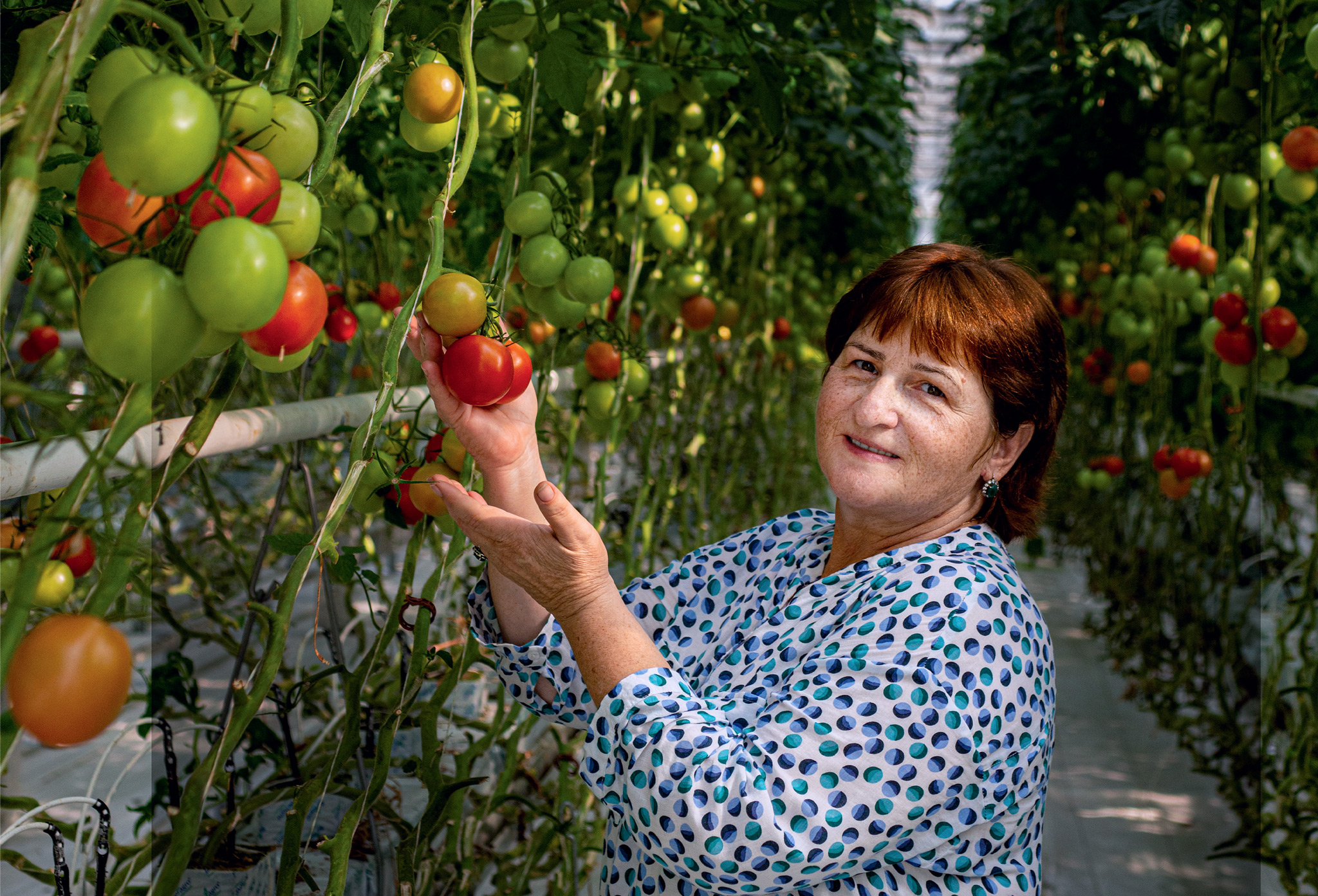 «Гринхаус-Про» и свежие овощи