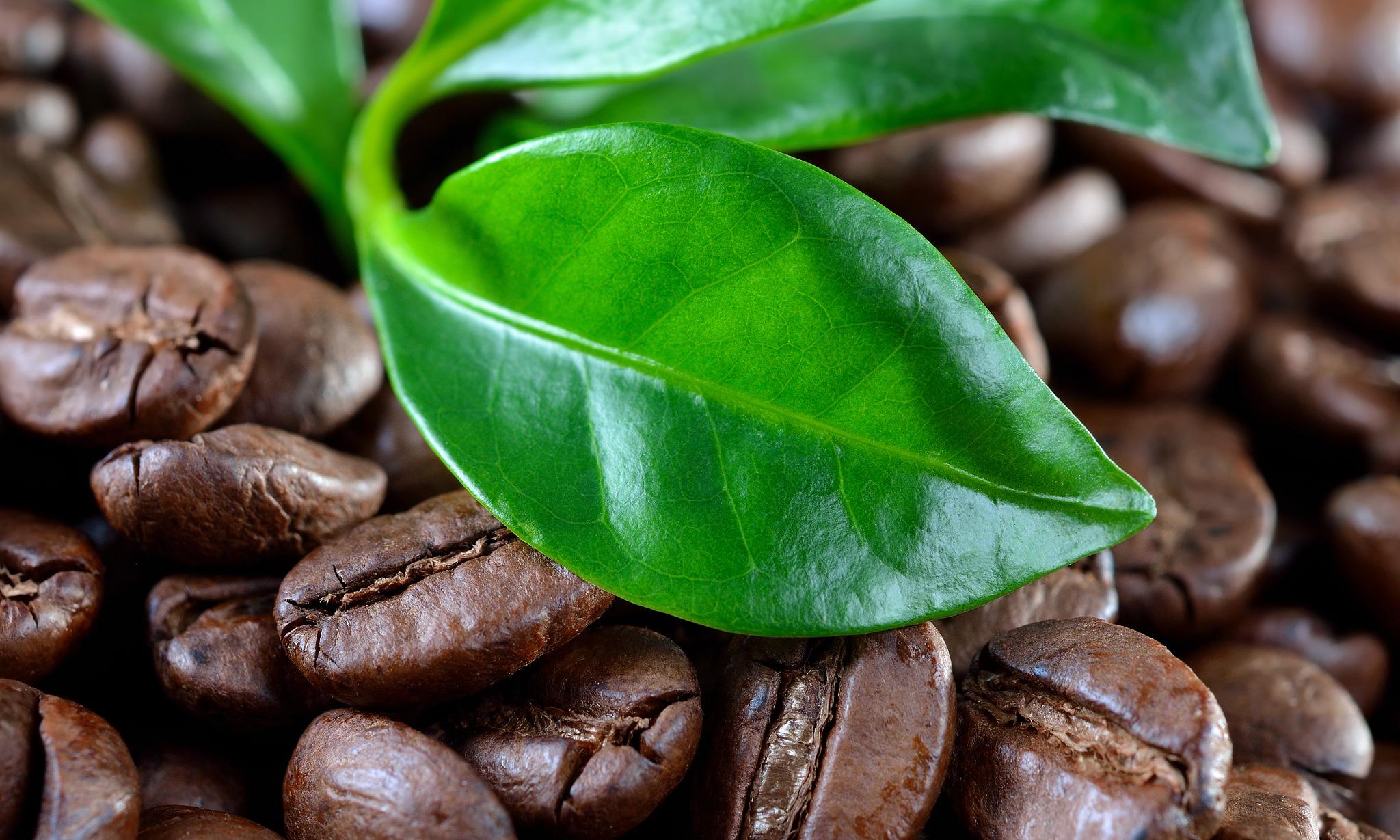 Кофе «Эксельсиор»