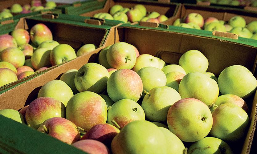 mirnoe apples