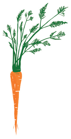 carrot pic2
