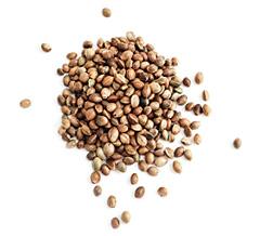 semena konoplya